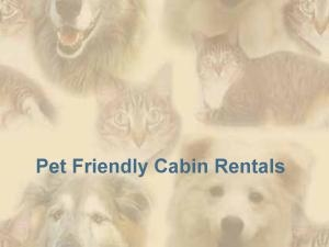Pet Friendly Cabin Rentals in the Georgia Blue Ridge Mountains